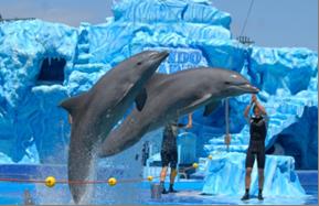 florida_what_to_sea_3 Τα 10 δημοφιλέστερα αξιοθέατα για παιδιά στη Φλόριντα, ΗΠΑ